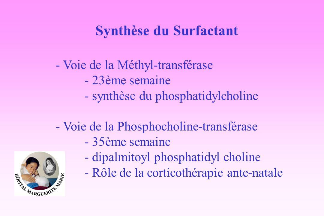 Synthèse du Surfactant - Voie de la Méthyl-transférase - 23ème semaine - synthèse du phosphatidylcholine - Voie de la Phosphocholine-transférase - 35è
