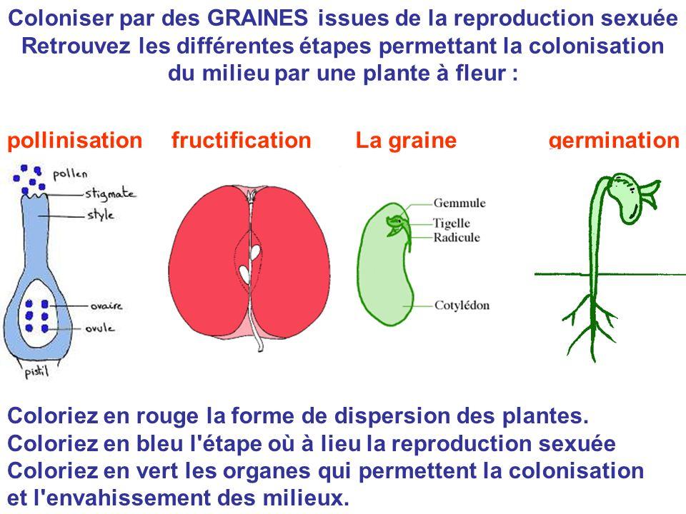 Coloniser par des GRAINES issues de la reproduction sexuée Retrouvez les différentes étapes permettant la colonisation du milieu par une plante à fleu