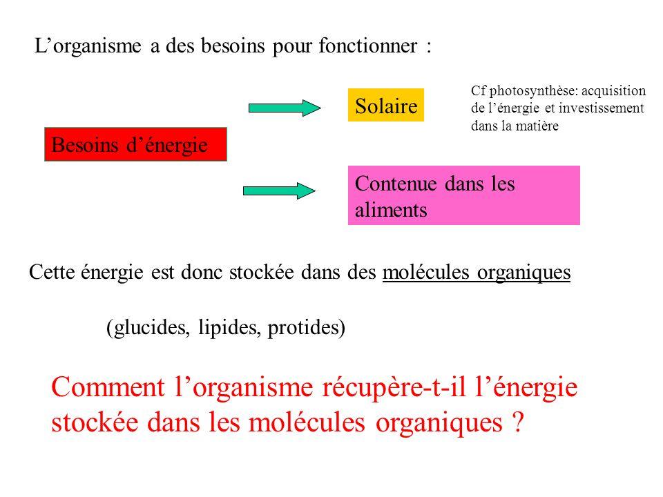 Lorganisme a des besoins pour fonctionner : Besoins dénergie (glucides, lipides, protides) Comment lorganisme récupère-t-il lénergie stockée dans les molécules organiques .
