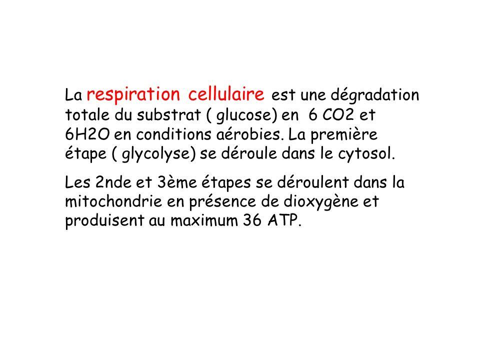 La respiration cellulaire est une dégradation totale du substrat ( glucose) en 6 CO2 et 6H2O en conditions aérobies.