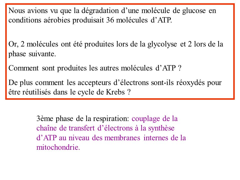 Nous avions vu que la dégradation dune molécule de glucose en conditions aérobies produisait 36 molécules dATP.