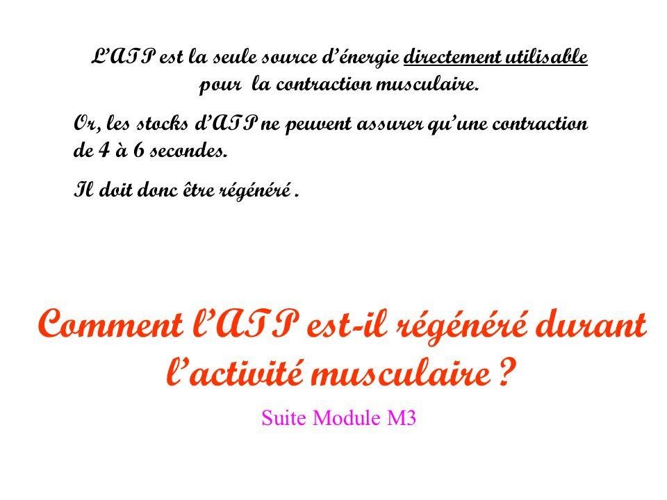LATP est la seule source dénergie directement utilisable pour la contraction musculaire.