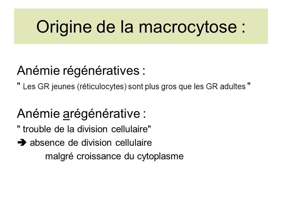 Origine de la macrocytose : Anémie régénératives : Les GR jeunes (réticulocytes) sont plus gros que les GR adultes Anémie arégénérative : trouble de la division cellulaire absence de division cellulaire malgré croissance du cytoplasme