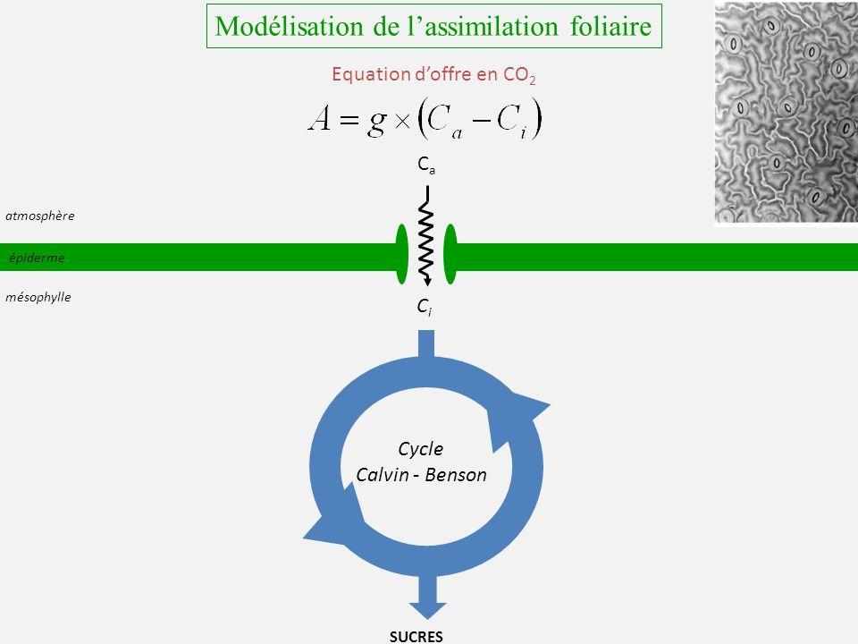 épiderme CaCa CiCi SUCRES atmosphère mésophylle Cycle Calvin - Benson Equation doffre en CO 2 Modélisation de lassimilation foliaire