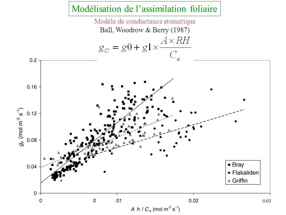 Modèle de conductance stomatique Ball, Woodrow & Berry (1987) Modélisation de lassimilation foliaire
