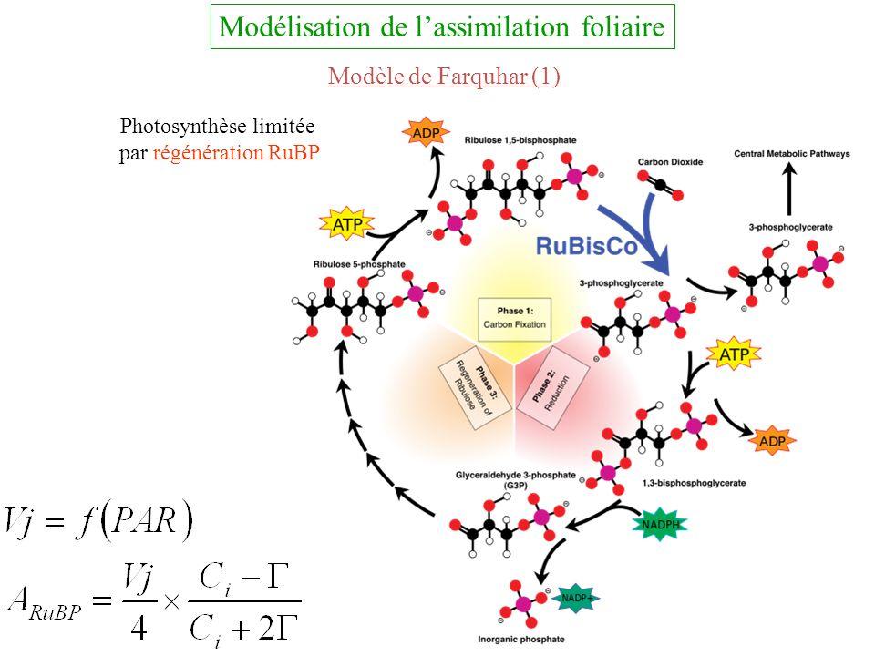 Modélisation de lassimilation foliaire Modèle de Farquhar (1) Photosynthèse limitée par régénération RuBP