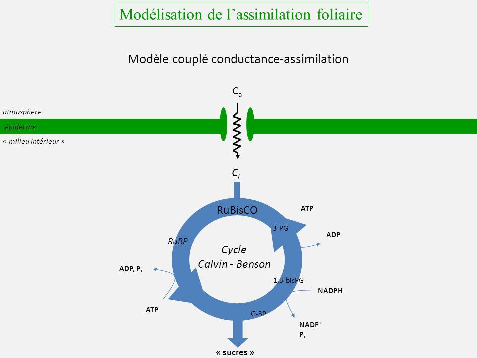 épiderme CiCi « sucres » NADPH ATP ADP atmosphère « milieu intérieur » RuBP 3-PG 1,3-bisPG G-3P NADP + P i ATP ADP, P i RuBisCO Modélisation de lassimilation foliaire Modèle couplé conductance-assimilation CaCa Cycle Calvin - Benson