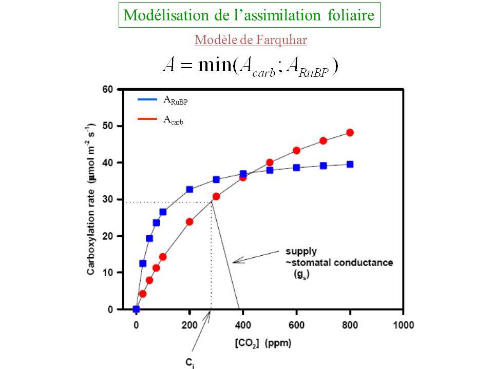 Modélisation de lassimilation foliaire Modèle de Farquhar A carb A RuBP