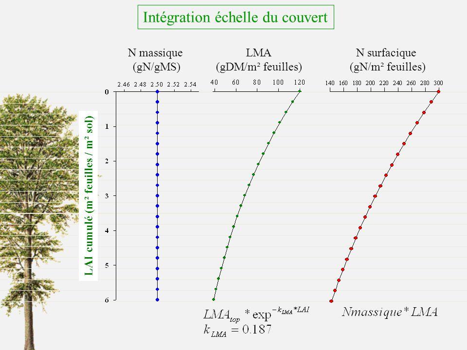 Intégration échelle du couvert LAI cumulé (m² feuilles / m² sol) N massique (gN/gMS) LMA (gDM/m² feuilles) N surfacique (gN/m² feuilles)
