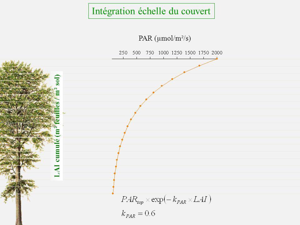 PAR (µmol/m²/s) LAI cumulé (m² feuilles / m² sol) Intégration échelle du couvert