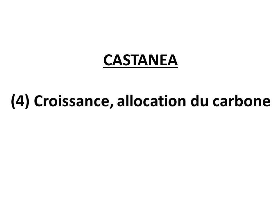CASTANEA (4) Croissance, allocation du carbone