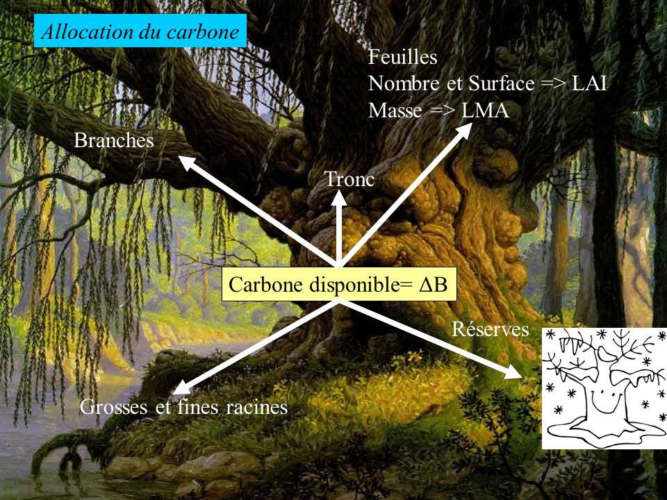 Carbone disponible= ΔB Réserves Grosses et fines racines Feuilles Nombre et Surface => LAI Masse => LMA Branches Tronc Allocation du carbone