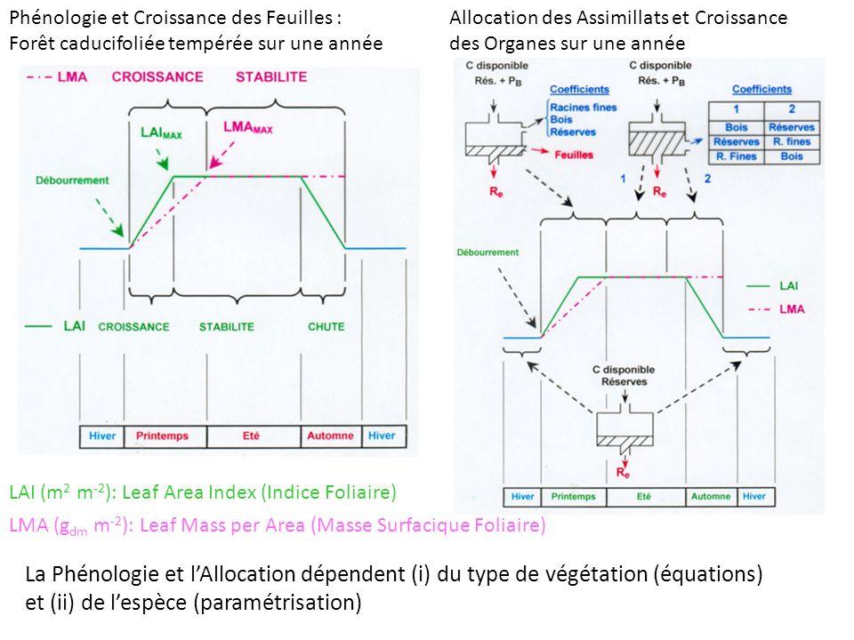 Phénologie et Croissance des Feuilles : Forêt caducifoliée tempérée sur une année LAI (m 2 m -2 ): Leaf Area Index (Indice Foliaire) LMA (g dm m -2 ): Leaf Mass per Area (Masse Surfacique Foliaire) Allocation des Assimillats et Croissance des Organes sur une année La Phénologie et lAllocation dépendent (i) du type de végétation (équations) et (ii) de lespèce (paramétrisation)