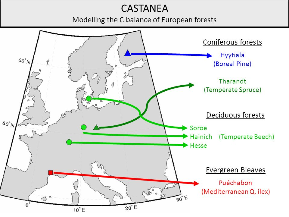 CASTANEA Modelling the C balance of European forests Coniferous forests Hyytiälä (Boreal Pine) Tharandt (Temperate Spruce) Evergreen Bleaves Puéchabon