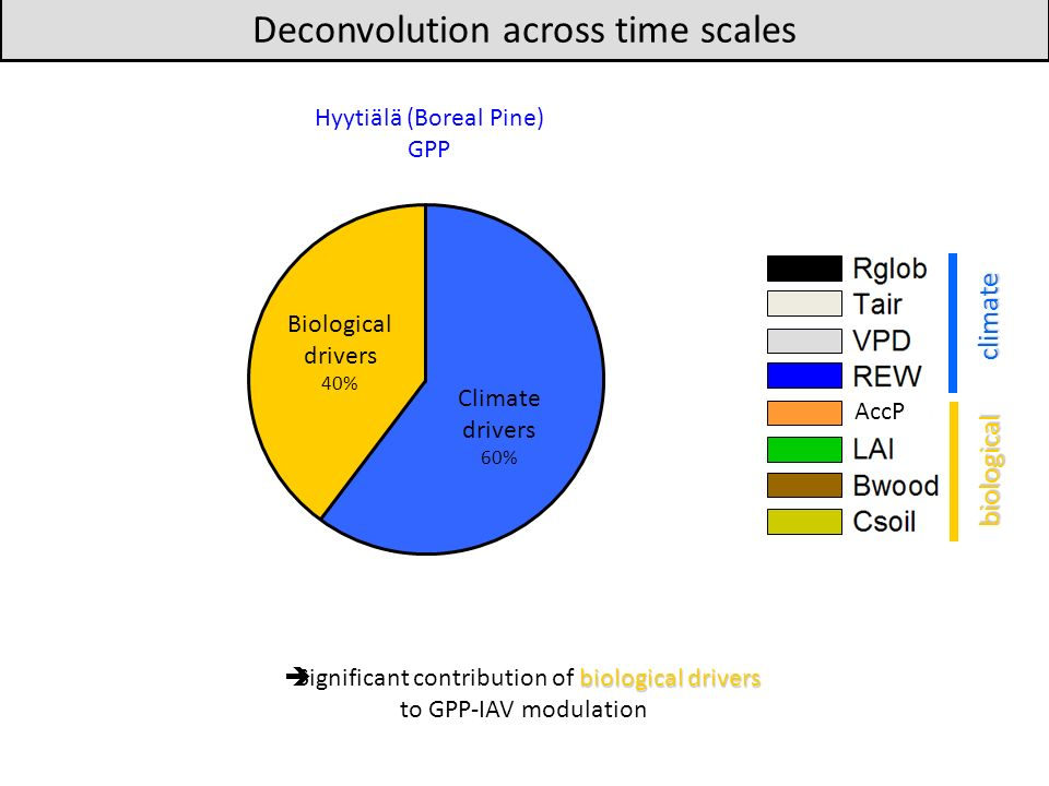 biological drivers Significant contribution of biological drivers to GPP-IAV modulation Deconvolution across time scales Hyytiälä (Boreal Pine) GPP climate biological AccP Climate drivers 60% Biological drivers 40%