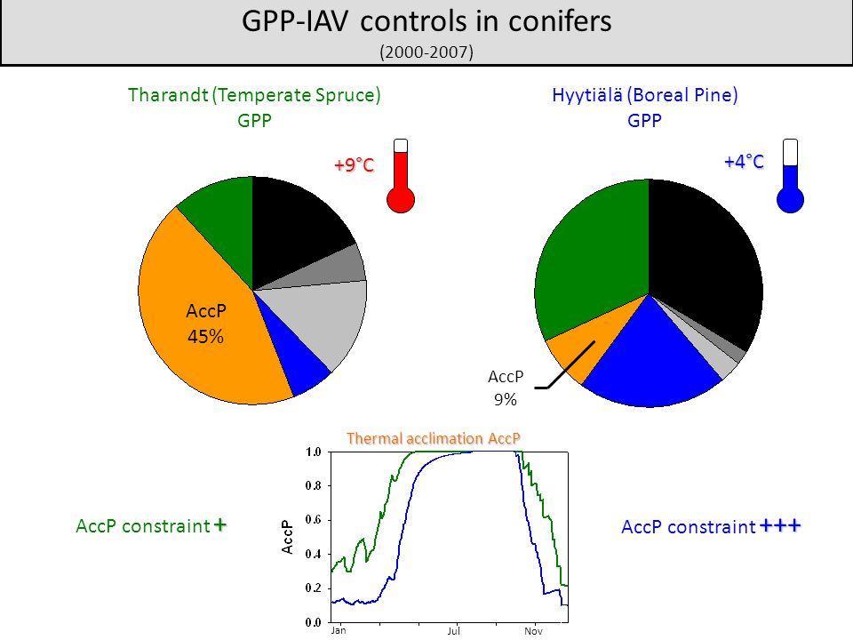 Thermal acclimation AccP Jan JulNov Hyytiälä (Boreal Pine) GPP Tharandt (Temperate Spruce) GPP GPP-IAV controls in conifers (2000-2007) +9°C +4°C AccP 45% AccP 9% +++ AccP constraint +++ + AccP constraint +