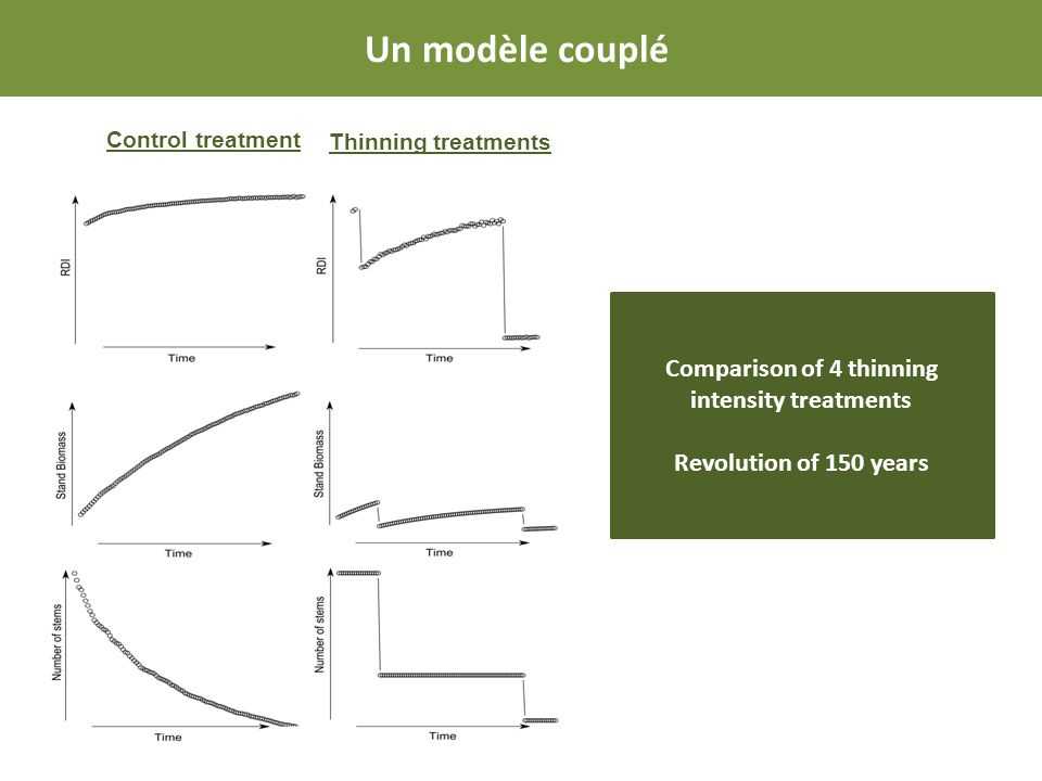 Control treatment Thinning treatments Comparison of 4 thinning intensity treatments Revolution of 150 years Un modèle couplé