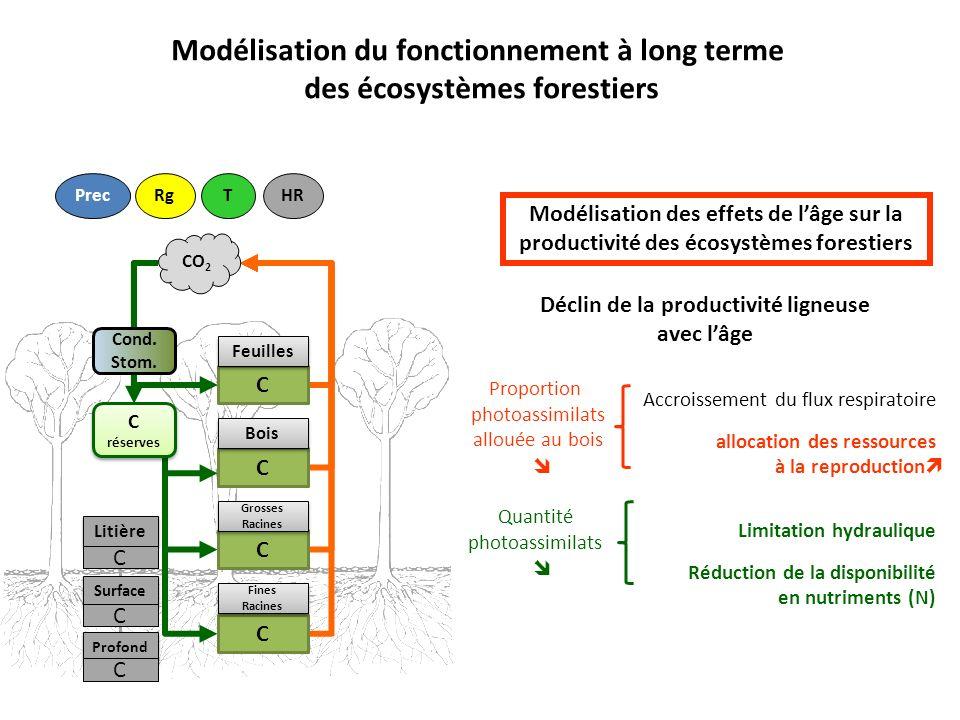 Modélisation des effets de lâge sur la productivité des écosystèmes forestiers Litière C Surface Profond C C Cond.