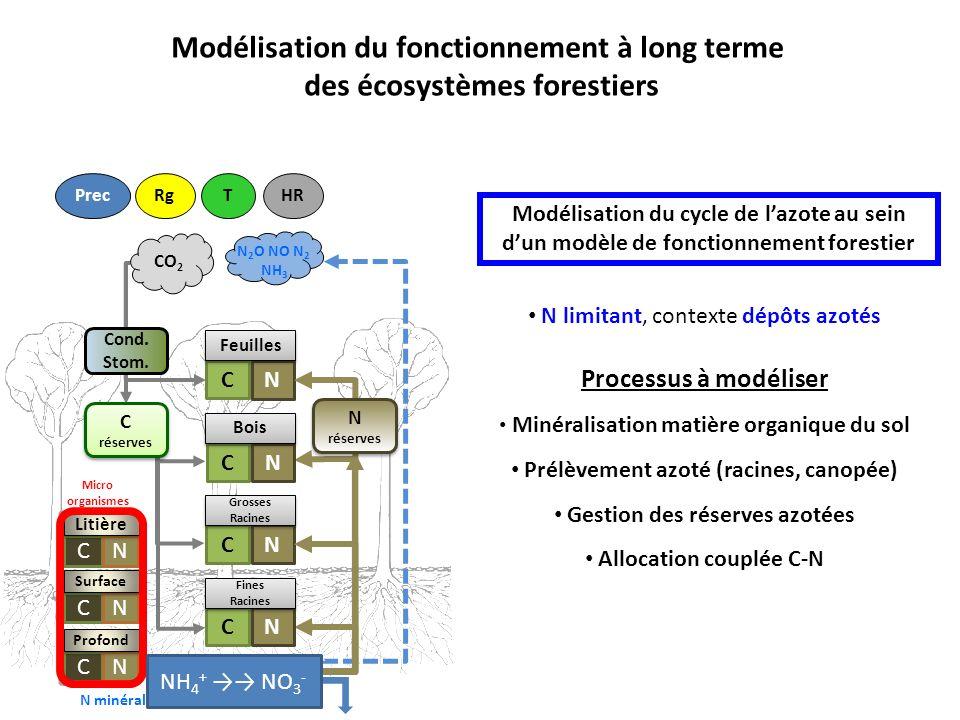 Modélisation du cycle de lazote au sein dun modèle de fonctionnement forestier Cond.