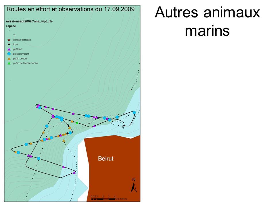 Autres animaux marins