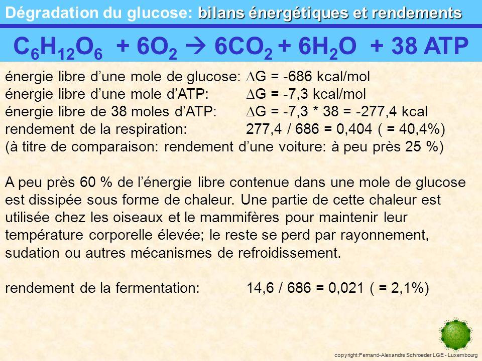 copyright:Fernand-Alexandre Schroeder LGE - Luxembourg fermentation alcoolique Respiration anaérobie: fermentation alcoolique glucosepyruvate 2NAD + 2NADH 2 Bilan de la glycolyse en anaérobiose (fermentation alcoolique): production de 2 molécules dATP par molécule de glucose 2ADP + 2Pi 2ATP 2NAD + 2NADH 2 acétaldéhyde 2CO 2 éthanol conséquence: le taux dalcool du milieu augmente; léthanol est toxique .