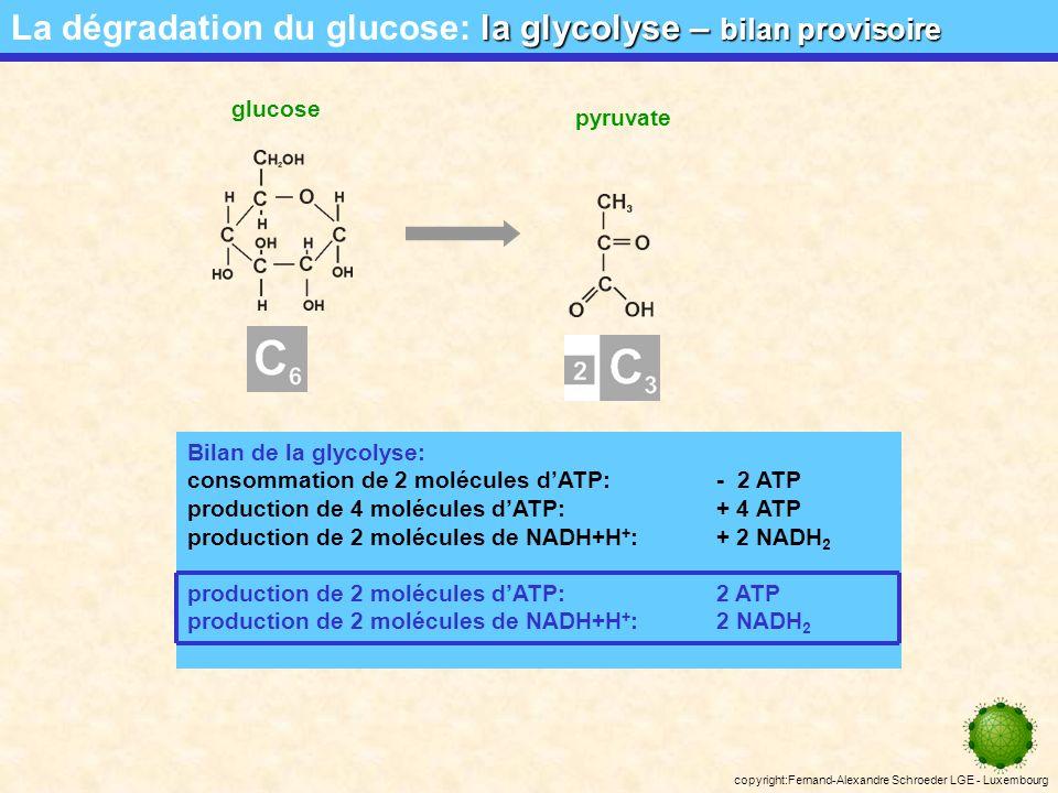 copyright:Fernand-Alexandre Schroeder LGE - Luxembourg la navette glycérol phosphate La dégradation du glucose: la navette glycérol phosphate phospho- glycérate phospho- dihydroxyacétone Au niveau de la membrane mitochondriale interne il y a oxydation du glycérol phosphate en PDHA avec transfert des électrons et H + sur CoQ.