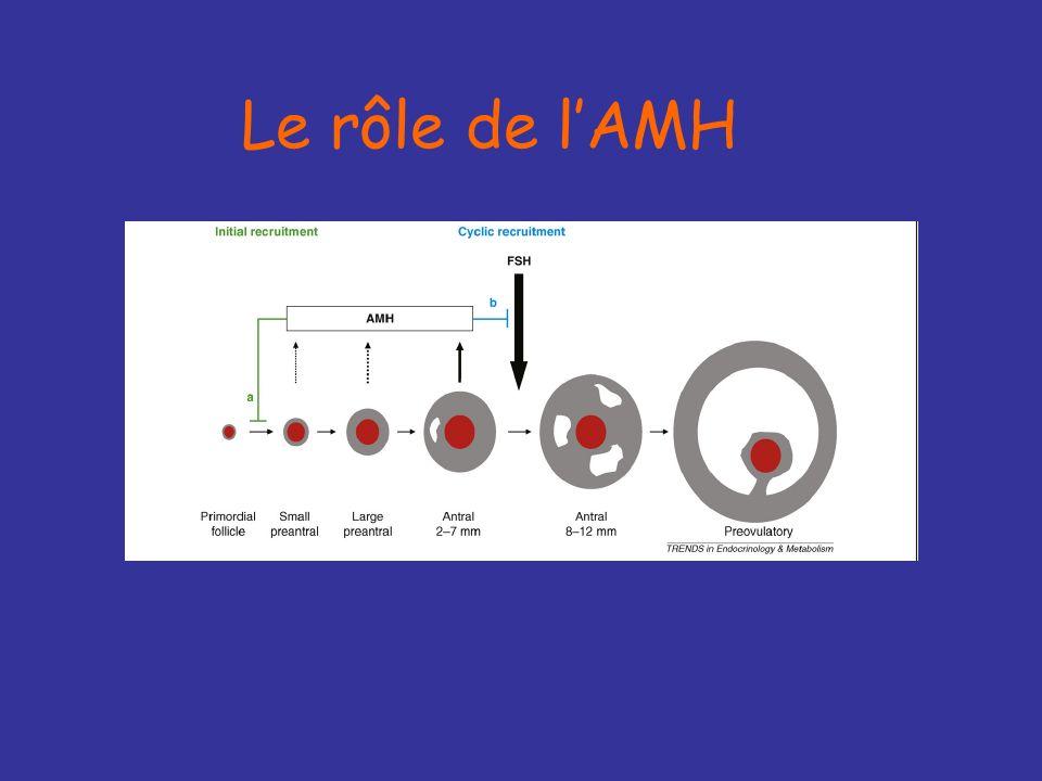 AMH +++ Hormone antimullérienne ou MIS produite par les cellules de la granulosa des follicules préantraux et antraux précoces Membre de la famille du