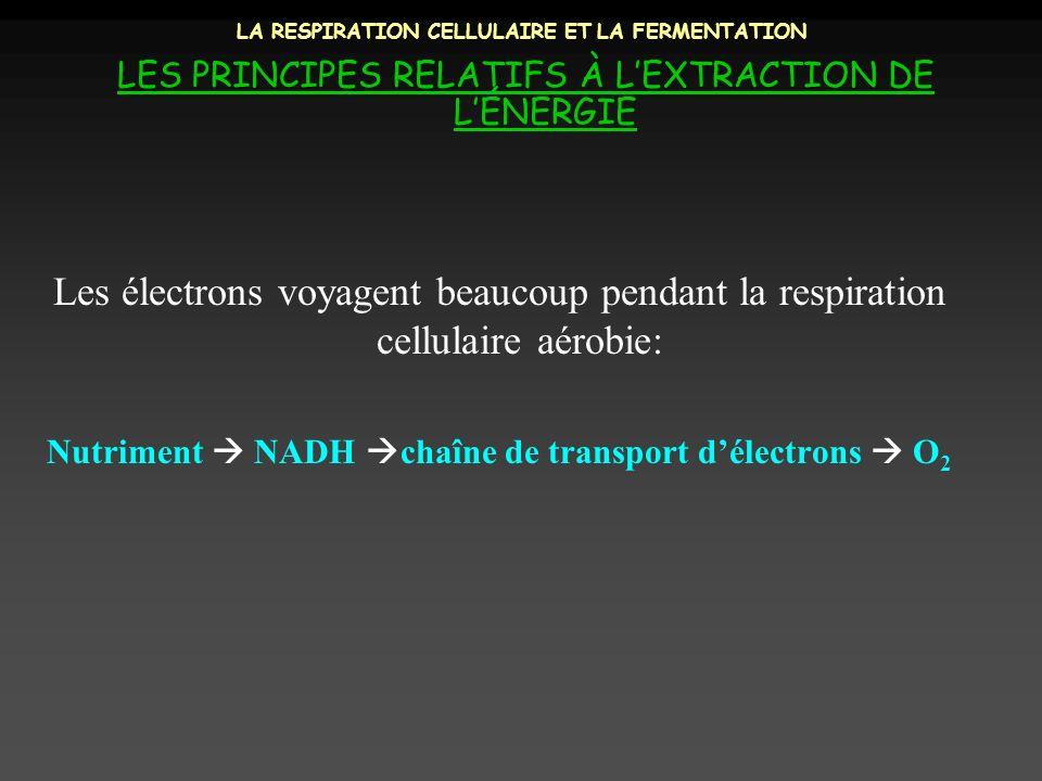 LA RESPIRATION CELLULAIRE ET LA FERMENTATION LES PRINCIPES RELATIFS À LEXTRACTION DE LÉNERGIE Les électrons voyagent beaucoup pendant la respiration c