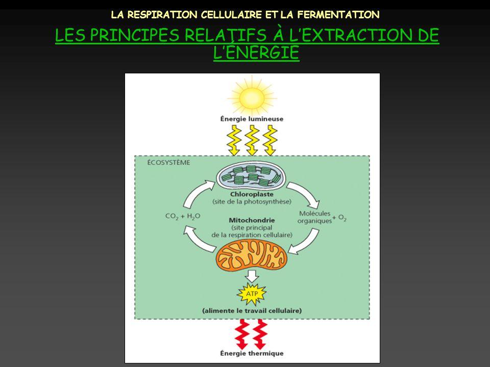 LA RESPIRATION CELLULAIRE ET LA FERMENTATION LES PRINCIPES RELATIFS À LEXTRACTION DE LÉNERGIE But du cours: Comprendre comment les cellules extraient de lénergie des molécules organiques et sen servent pour régénérer lATP.