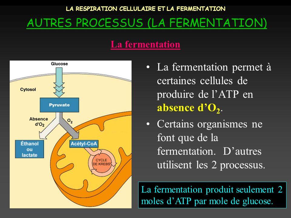 LA RESPIRATION CELLULAIRE ET LA FERMENTATION AUTRES PROCESSUS (LA FERMENTATION) La fermentation permet à certaines cellules de produire de lATP en abs