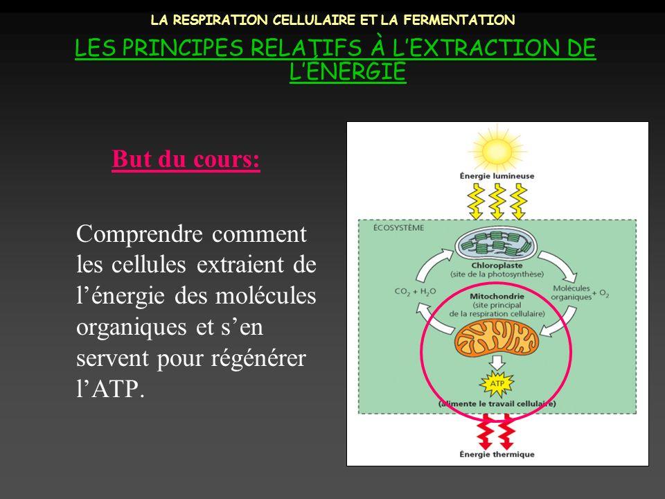 LA RESPIRATION CELLULAIRE ET LA FERMENTATION LES PRINCIPES RELATIFS À LEXTRACTION DE LÉNERGIE But du cours: Comprendre comment les cellules extraient