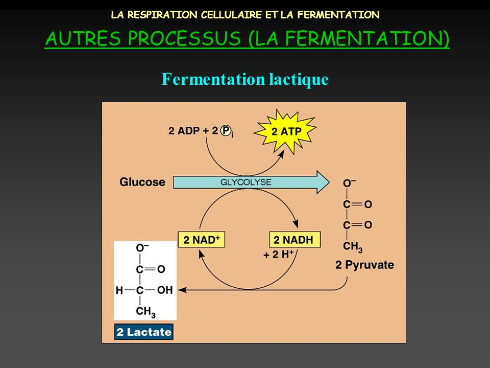 LA RESPIRATION CELLULAIRE ET LA FERMENTATION AUTRES PROCESSUS (LA FERMENTATION) Fermentation lactique