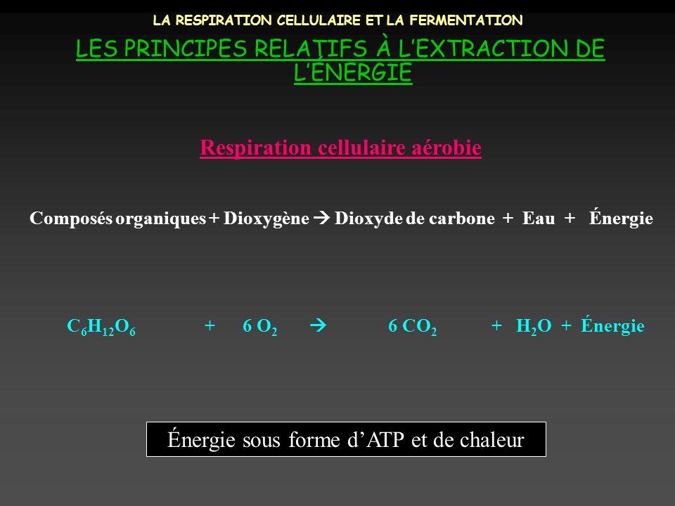 LA RESPIRATION CELLULAIRE ET LA FERMENTATION LES PRINCIPES RELATIFS À LEXTRACTION DE LÉNERGIE Composés organiques + Dioxygène Dioxyde de carbone + Eau