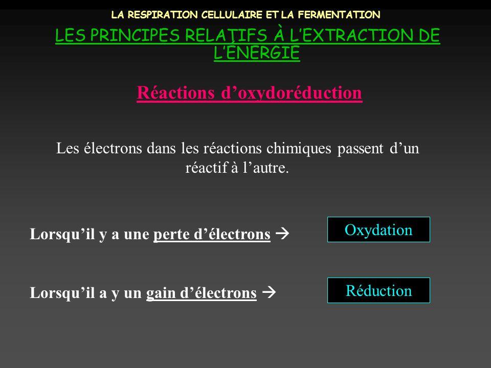 LA RESPIRATION CELLULAIRE ET LA FERMENTATION LES PRINCIPES RELATIFS À LEXTRACTION DE LÉNERGIE Réactions doxydoréduction Les électrons dans les réactio