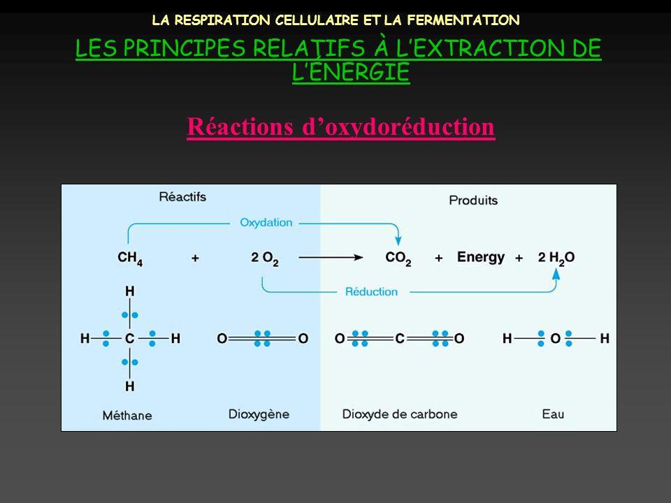 LA RESPIRATION CELLULAIRE ET LA FERMENTATION LES PRINCIPES RELATIFS À LEXTRACTION DE LÉNERGIE C 6 H 12 O 6 + 6 O 2 6 CO 2 + H 2 O + Énergie Respiration cellulaire aérobie oxydation réduction