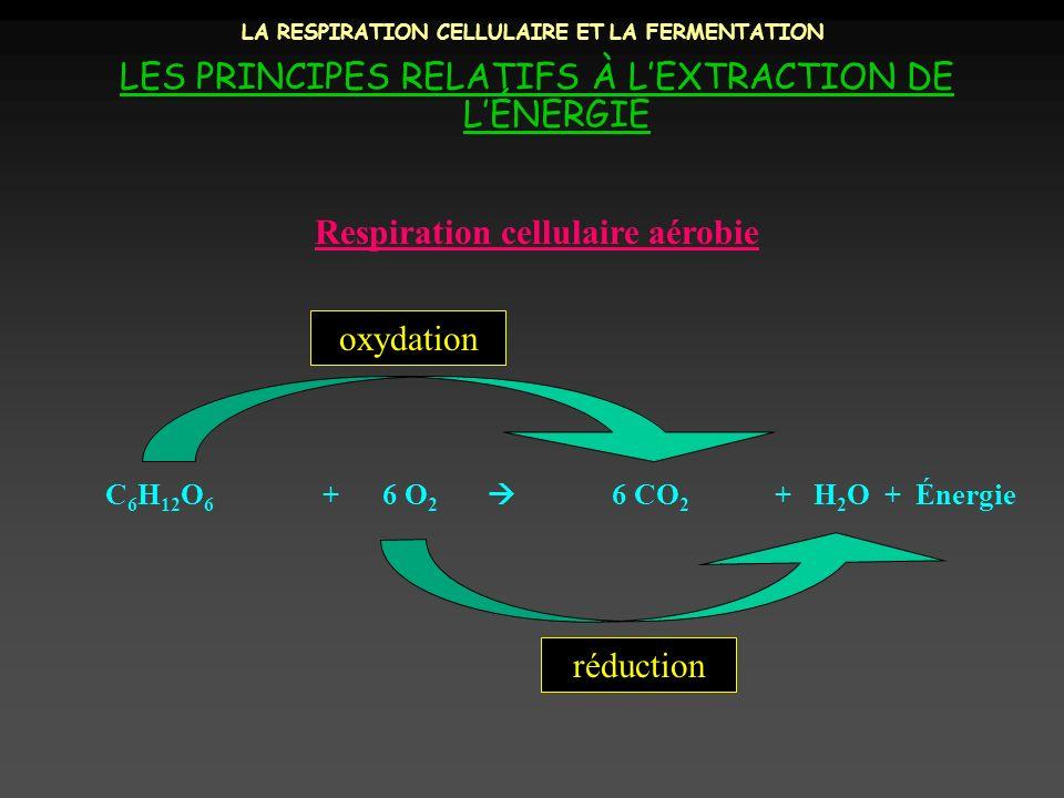 LA RESPIRATION CELLULAIRE ET LA FERMENTATION LES PRINCIPES RELATIFS À LEXTRACTION DE LÉNERGIE C 6 H 12 O 6 + 6 O 2 6 CO 2 + H 2 O + Énergie Respiratio