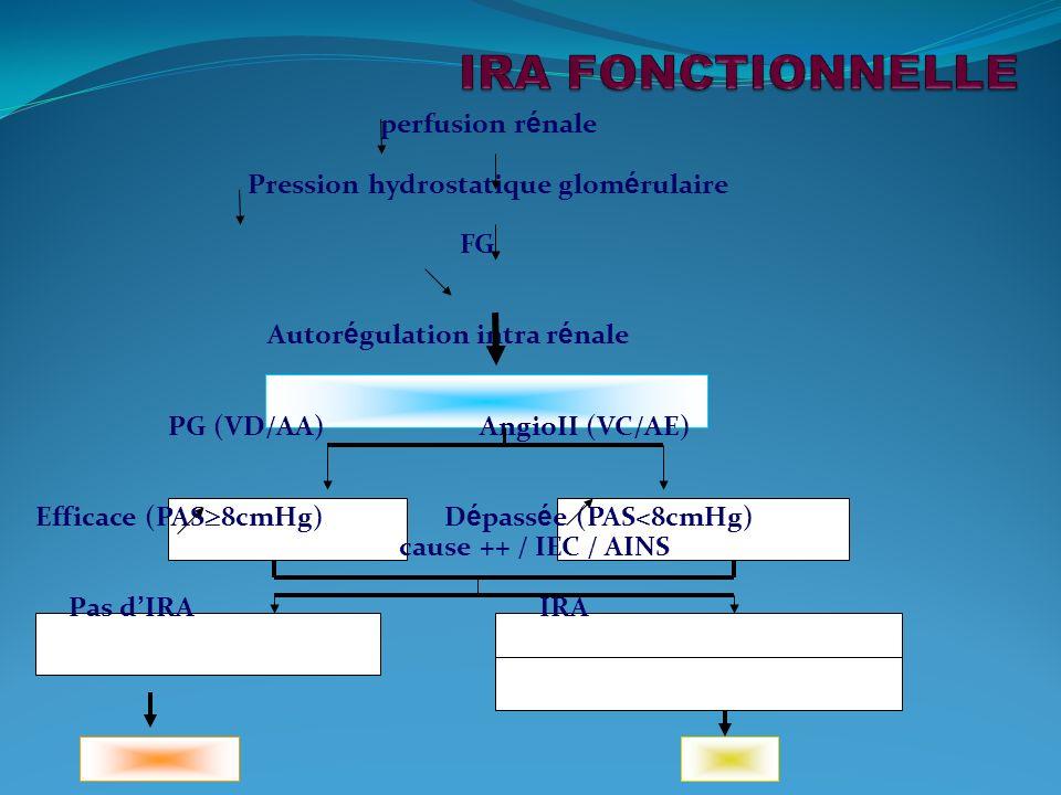 perfusion r é nale Pression hydrostatique glom é rulaire FG Autor é gulation intra r é nale PG (VD/AA) AngioII (VC/AE) Efficace (PAS 8cmHg) D é pass é