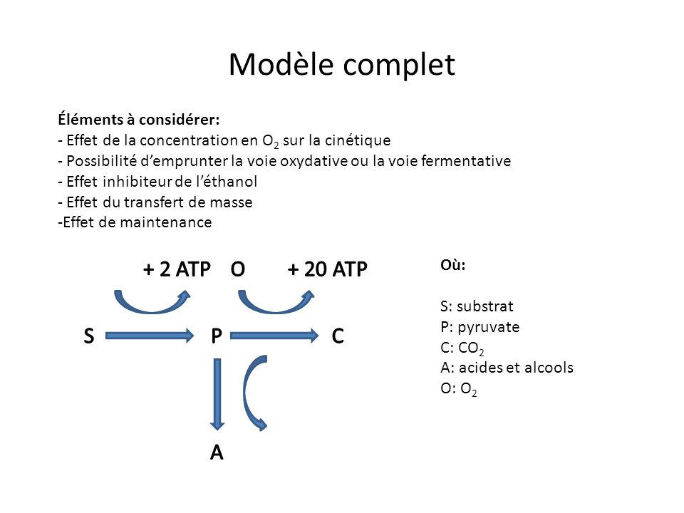 Modèle complet Éléments à considérer: - Effet de la concentration en O 2 sur la cinétique - Possibilité demprunter la voie oxydative ou la voie fermentative - Effet inhibiteur de léthanol - Effet du transfert de masse -Effet de maintenance Où: S: substrat P: pyruvate C: CO 2 A: acides et alcools O: O 2