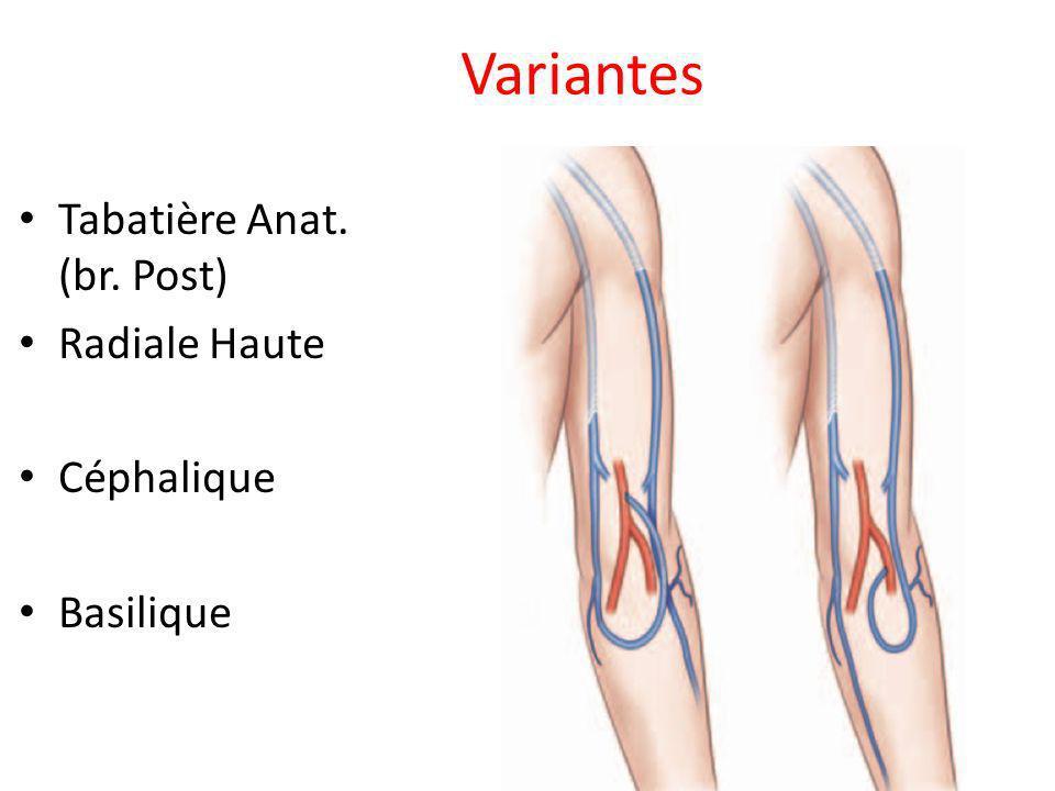 Variantes Tabatière Anat. (br. Post) Radiale Haute Céphalique Basilique
