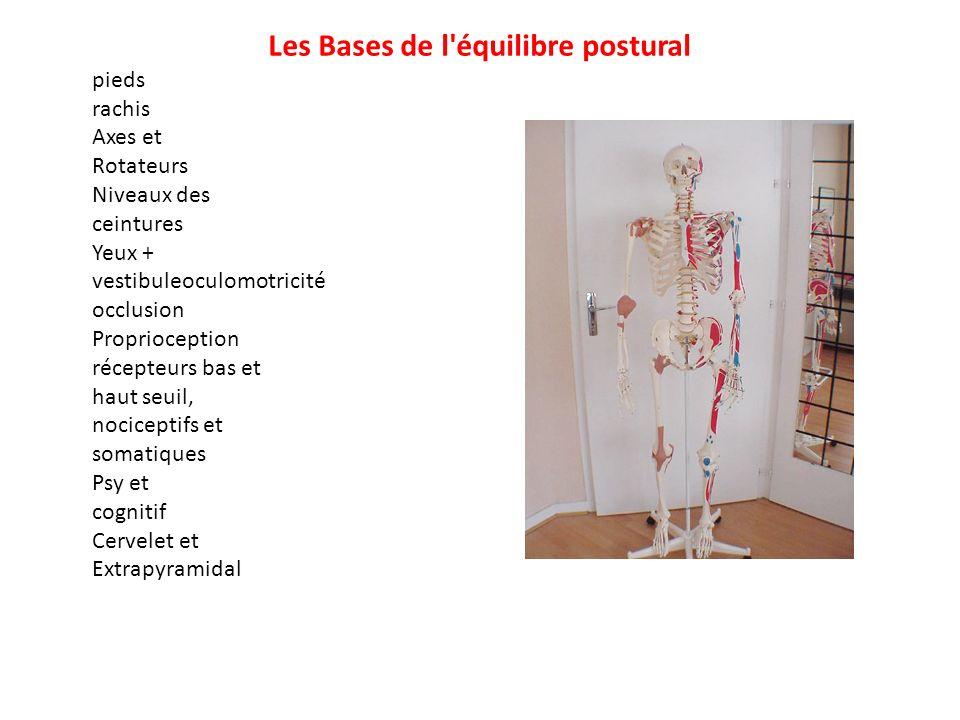Les Bases de l'équilibre postural pieds rachis Axes et Rotateurs Niveaux des ceintures Yeux + vestibuleoculomotricité occlusion Proprioception récepte