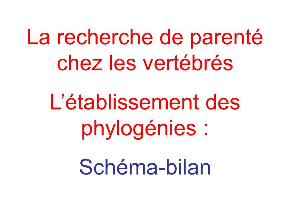 La recherche de parenté chez les vertébrés Létablissement des phylogénies : Schéma-bilan