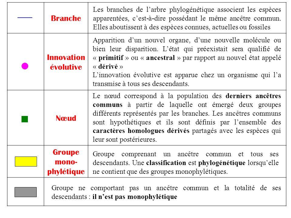 Branche Innovation évolutive Nœud Groupe mono- phylétique Les branches de larbre phylogénétique associent les espèces apparentées, cest-à-dire posséda