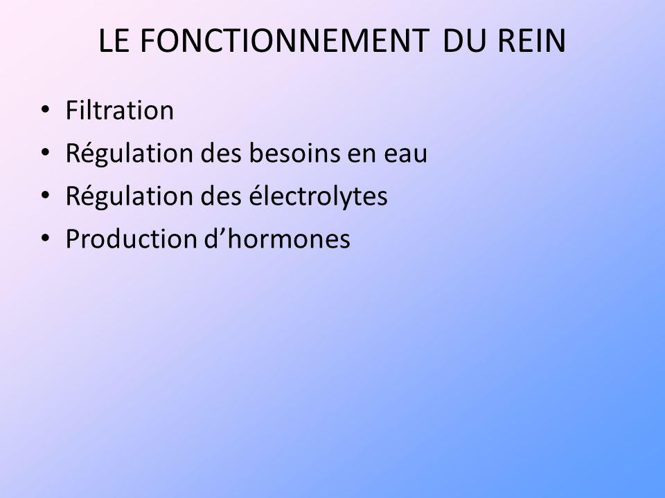 LE FONCTIONNEMENT DU REIN Filtration Régulation des besoins en eau Régulation des électrolytes Production dhormones
