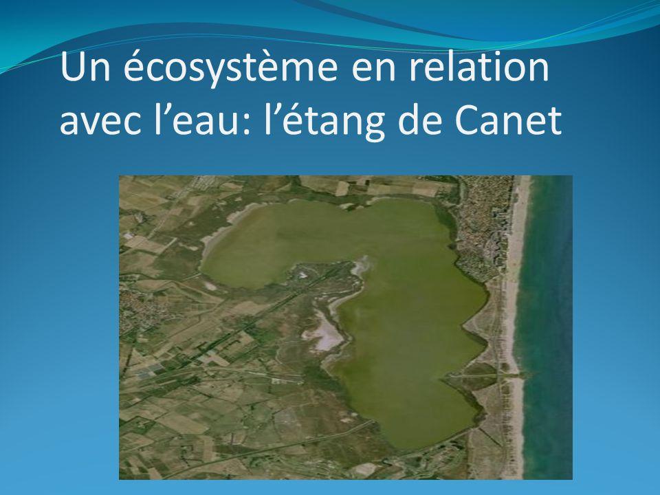 Un écosystème en relation avec leau: létang de Canet