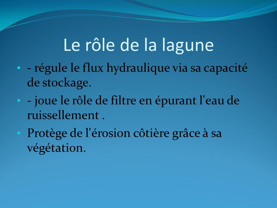 Le rôle de la lagune - régule le flux hydraulique via sa capacité de stockage. - joue le rôle de filtre en épurant l'eau de ruissellement. Protège de
