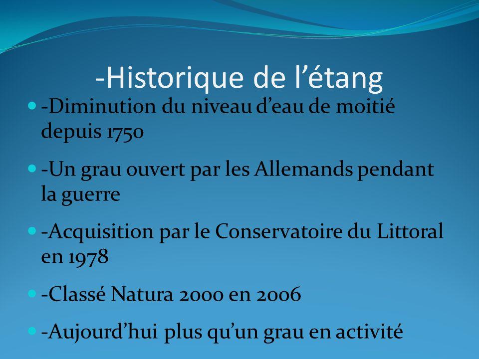 -Historique de létang -Diminution du niveau deau de moitié depuis 1750 -Un grau ouvert par les Allemands pendant la guerre -Acquisition par le Conserv