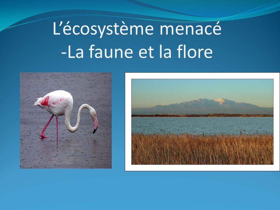 Lécosystème menacé -La faune et la flore