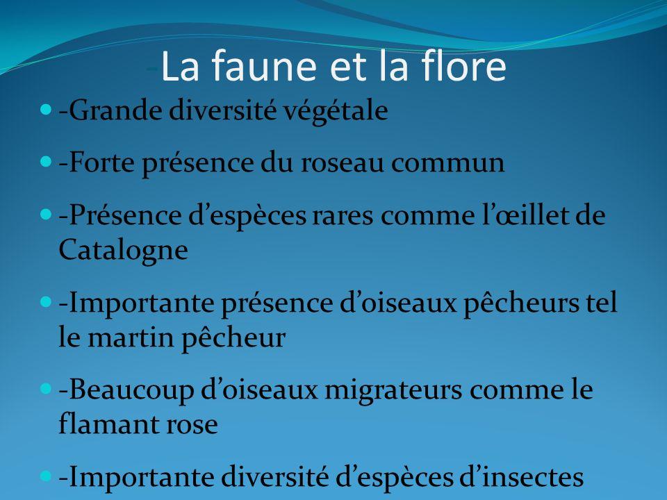 -La faune et la flore -Grande diversité végétale -Forte présence du roseau commun -Présence despèces rares comme lœillet de Catalogne -Importante prés