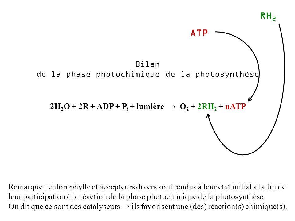 2H 2 O + 2R + ADP + P i + lumière O 2 + 2RH 2 + nATP Bilan de la phase photochimique de la photosynthèse Remarque : chlorophylle et accepteurs divers sont rendus à leur état initial à la fin de leur participation à la réaction de la phase photochimique de la photosynthèse.