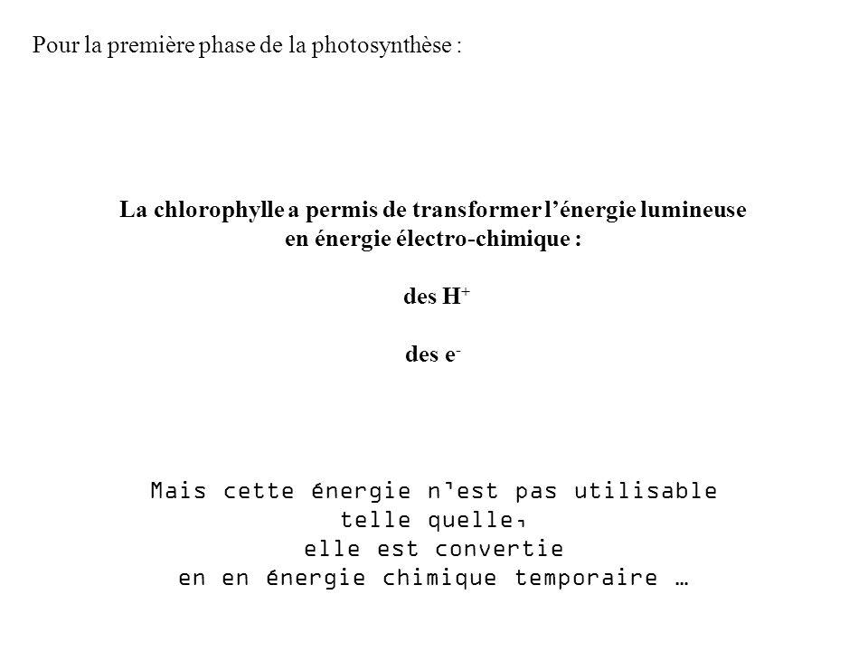 Pour la première phase de la photosynthèse : La chlorophylle a permis de transformer lénergie lumineuse en énergie électro-chimique : des H + des e - Mais cette énergie nest pas utilisable telle quelle, elle est convertie en en énergie chimique temporaire …